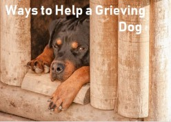Ways to Help a Dog Grieving the Loss of Another Dog