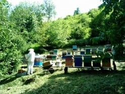 What Do Beekeepers Do: September