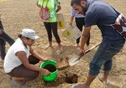 How to Sample Soil for Soil Testing