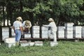 What Do Beekeepers Do in Summer