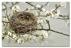 The Ups and Downs of a New Empty Nester