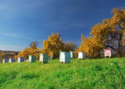 What Do Beekeepers Do in Fall