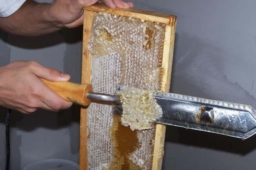 Uncapping honey for extraction