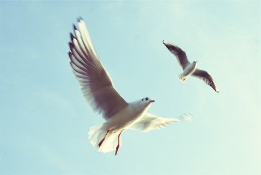 A faster shutter speed will allow you to freeze brids mid-flight