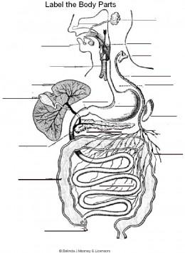 Human Anatomy Coloring Pages - xelidula71.over-blog.com