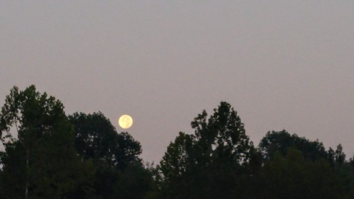 Sometimes you will be fortunate enough to see a big, full moon on an early walk.