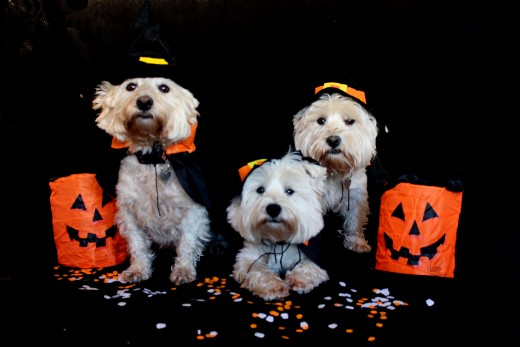 Many dogs enjoy Trick or Treatin just as much as humans do,