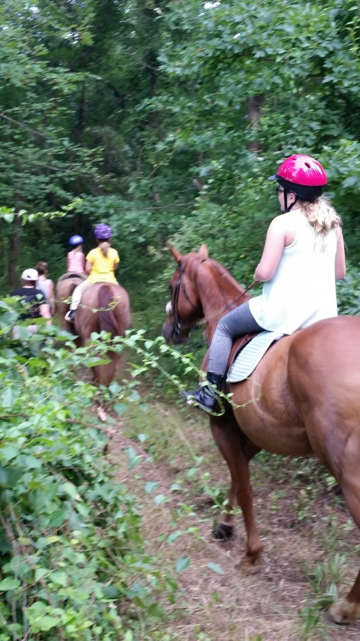 Molly is in the middle of the pack on this trail ride. Right where she likes to be, surrounded by her friends. She is a follower.