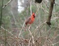 The Wings of Winter - Helping Wild Birds Survive