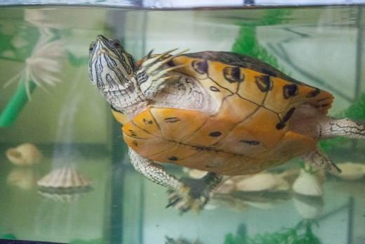 Pet Turtle Aquarium