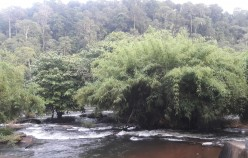 Experience Athirappilly Waterfalls With Words