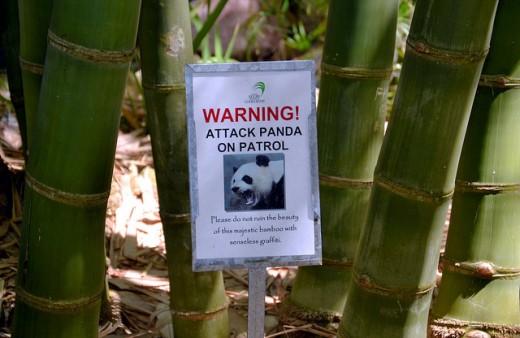 Bamboo Garden: Marie Selby Botanical Gardens