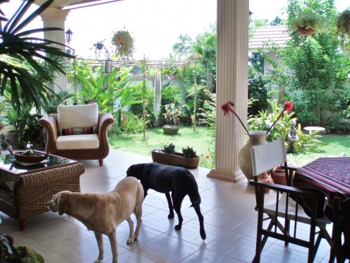 So this is our new home!  Tessa and Pippa soon after their safe arrival in Thailand. 2006