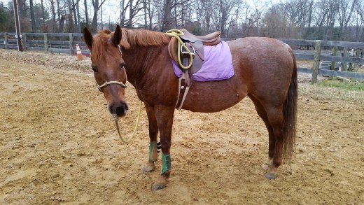 """Molly isn't a bad horse. Just has her lazy and stubborn moments, Her riders hear :get after her"""" often."""