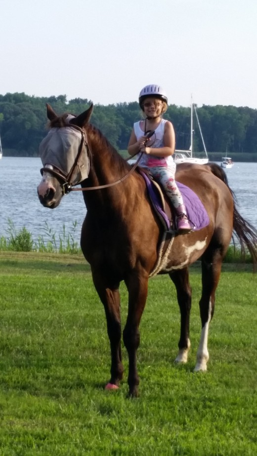 Romeo is a safe trail horse for any level rider.