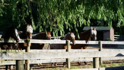 A is for appaloosa. As in the cute little spotted one in the middle of this picture!