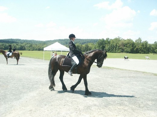 D is for Dressage and Drama....