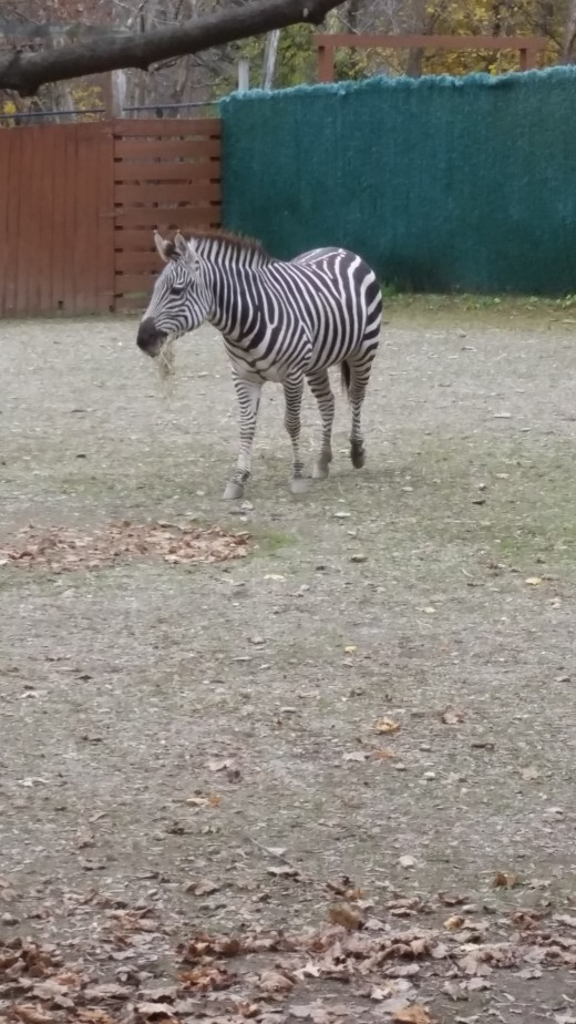 I wish I could have figured out how to sneak this baby out of the zoo!