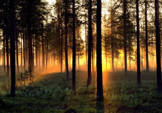 midnight sun, sweden