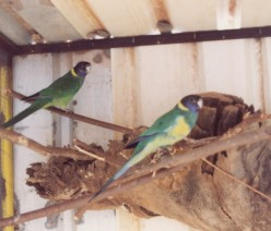 Setting up birdhouses or nesting boxes in your own back yard