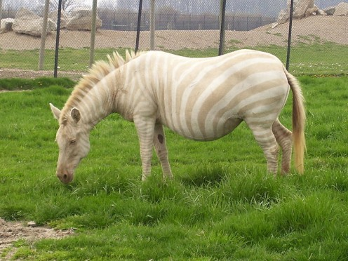 Top 5 Unexpected Things You Might Not Know About Zebras