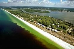 Florida's Red Tide Disaster is on Both Coasts