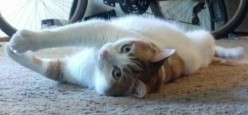 Bad Behavior, Cat Kicking Litter out of Box And Crunchy Carpet Effect