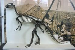 The Camptosaurus