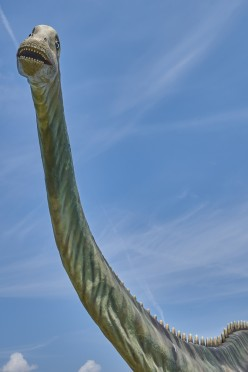 About the Big Brachiosaurus