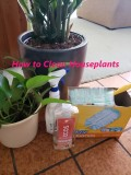 Safest Way to Clean Houseplants