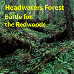 Headwaters Forest Reserve: Battle for the Redwoods