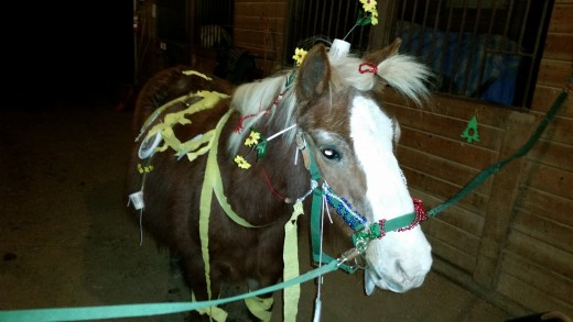 Huey, may he rest in peace, was one of the only ponies we ever had that was a successful as both a pony ride and lesson pony. Ponies that do both are hard to find.
