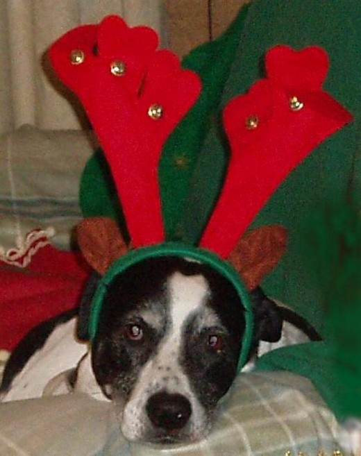 Rio was the best dog and he made a funny reindeer. There is a matching postage stamp, too.