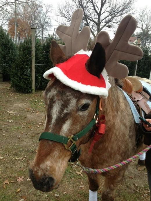 Peanut makes a great reindeer!