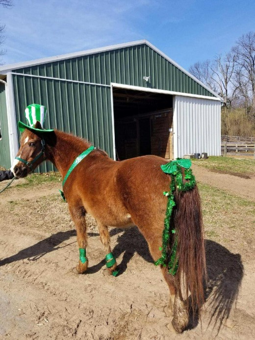 """Our old man """"Dejavu Dublin"""" dressed up appropriately as a Leprechaun."""