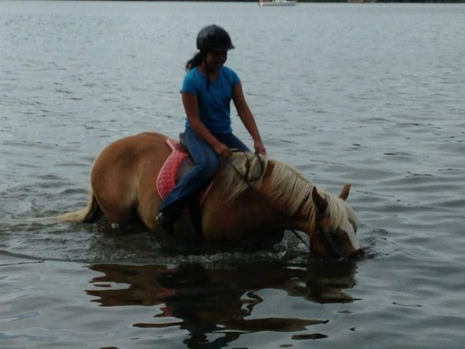 Dunkin, oh little Dunkin....he was my personal encyclopedia of horse lessons and life lessons. He fits into many of the categories mentioned in this article.