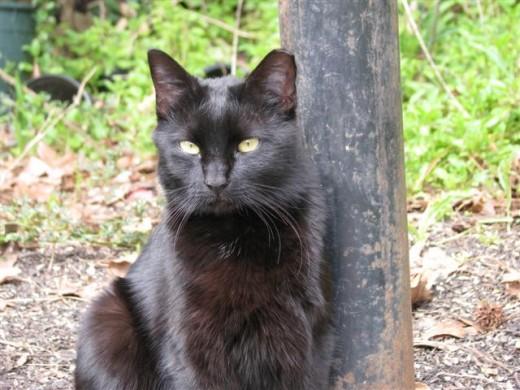 Hi, I'm Pepper, the new cat on Hummingbird Hill.