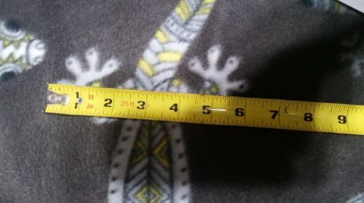 measuring width of salamander