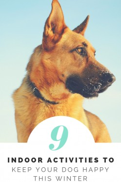 Keep Your Pooch Entertained This Winter with These 9 Indoor Activities