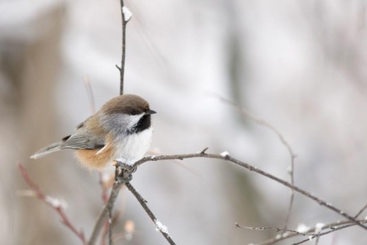 By the year 2050, as the climate warms, many northern songbirds, such as chestnut warblers and orange-throated warblers, can breed in cooler forests north of the park's borders.