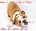 How to Potty Train Your Puppy If You Work All Day