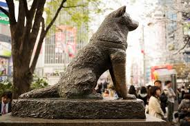 Hachiko: The legendary faithful dog from japan.