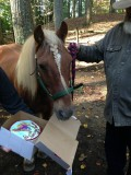 What Are Horses Thankful For?