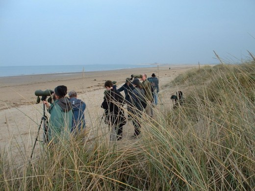 Titchwell Beach is a popular place for birders who wish to engage in a spot of seawatching. Source: Andy Peacock via Wikimedia Commons