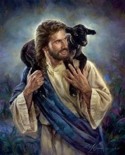 Devotional: The Sheep on the Shepherd's Shoulder