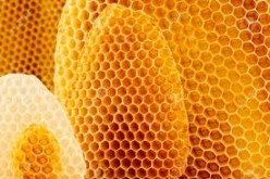 Beeswax - The Beauty of Nature