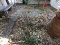 Leaf Litter as Natural Mulch for Home Garden