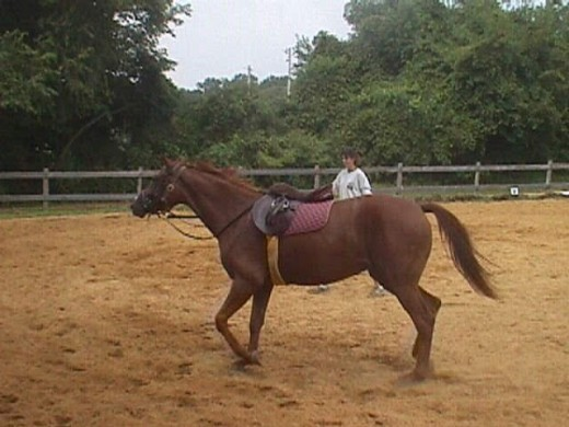 My Zelda was a project horse she was not broke to ride when I got her. I broke her with the help of my trainer at the time.