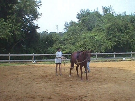 When I got Zelda, when I was 15, I would have had no business trying to break a horse by myself without the help of my trainer. Here we were teaching her to ground drive, by the time I climbed on her back she already knew how to steer!