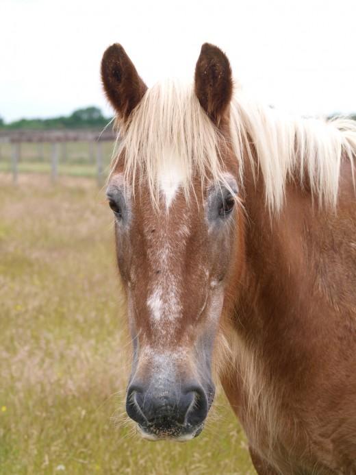 "The Horse is a Symbol for Common Sense (aka ""horse sense"")"